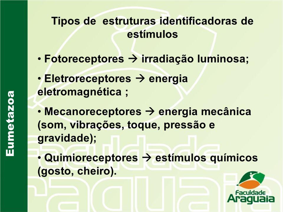 Tipos de estruturas identificadoras de estímulos