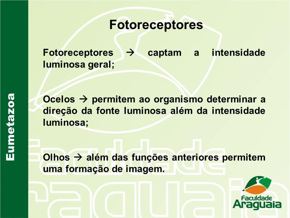 Fotoreceptores Eumetazoa