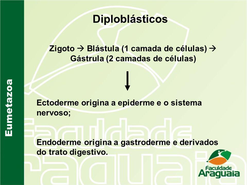 Diploblásticos Eumetazoa