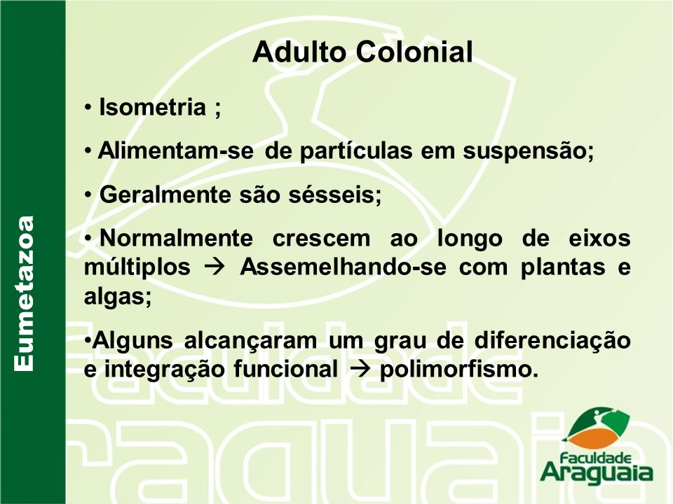 Adulto Colonial Eumetazoa Isometria ;