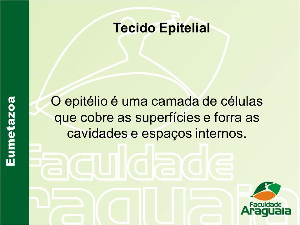 Tecido Epitelial O epitélio é uma camada de células que cobre as superfícies e forra as cavidades e espaços internos.