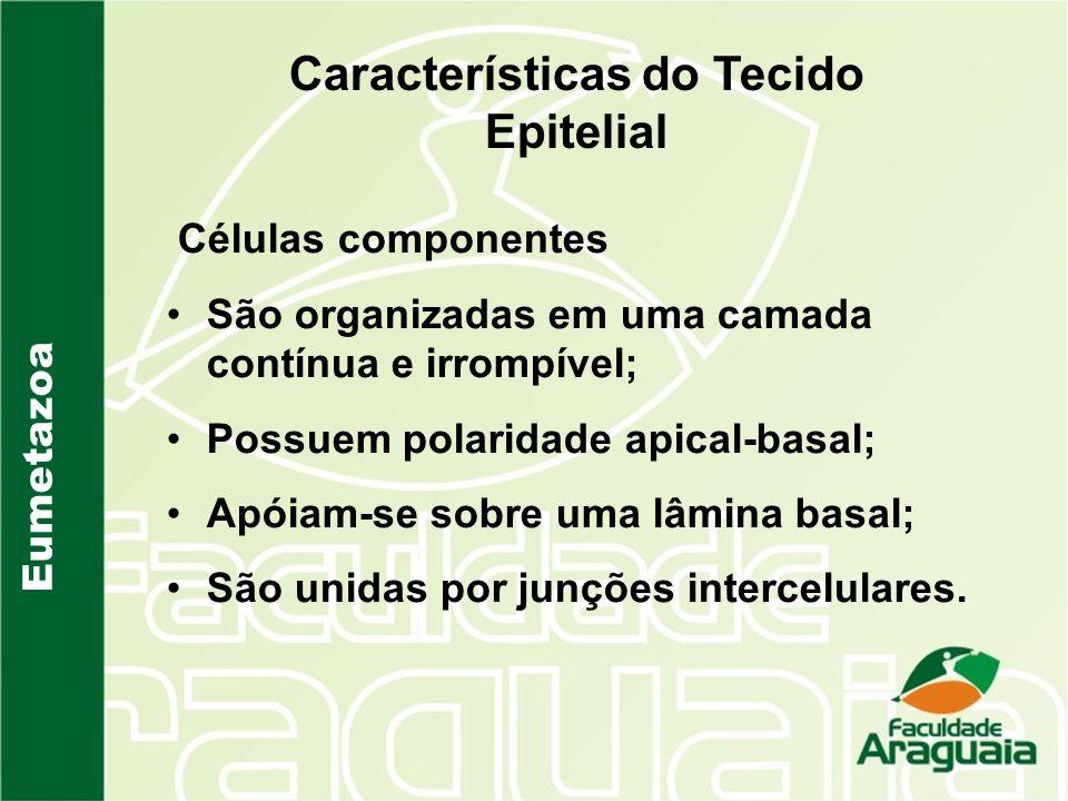 Características do Tecido Epitelial