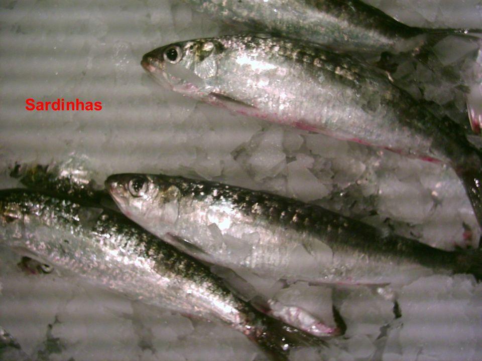 Sardinhas Actinopterygii