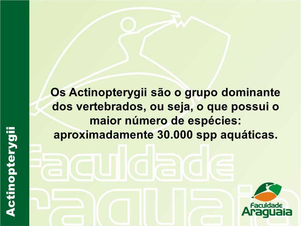 Os Actinopterygii são o grupo dominante dos vertebrados, ou seja, o que possui o maior número de espécies: aproximadamente 30.000 spp aquáticas.