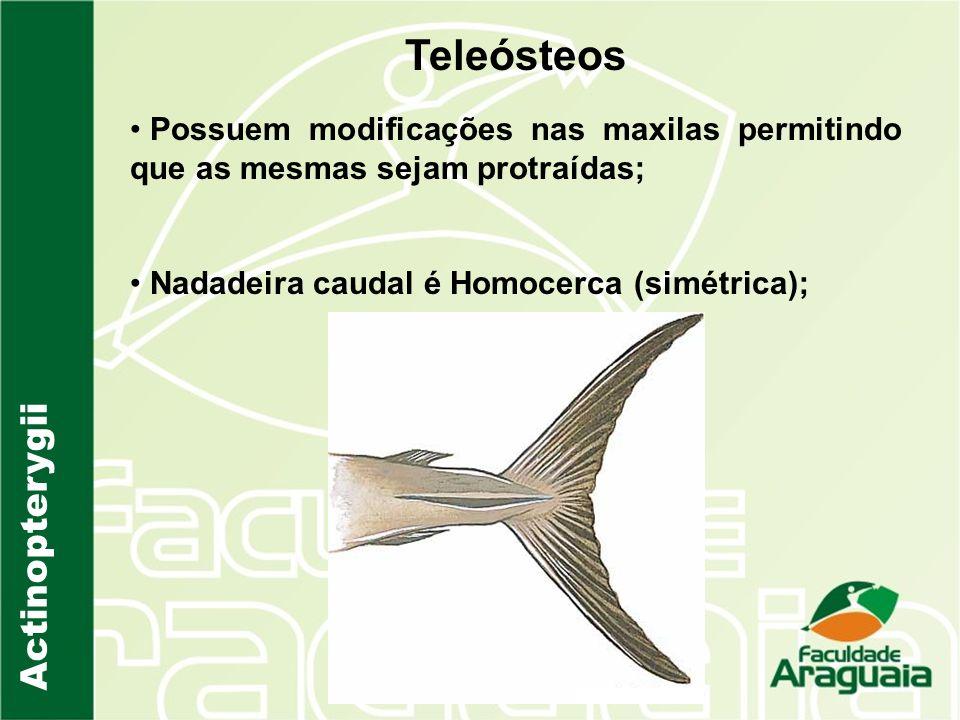 Teleósteos Actinopterygii