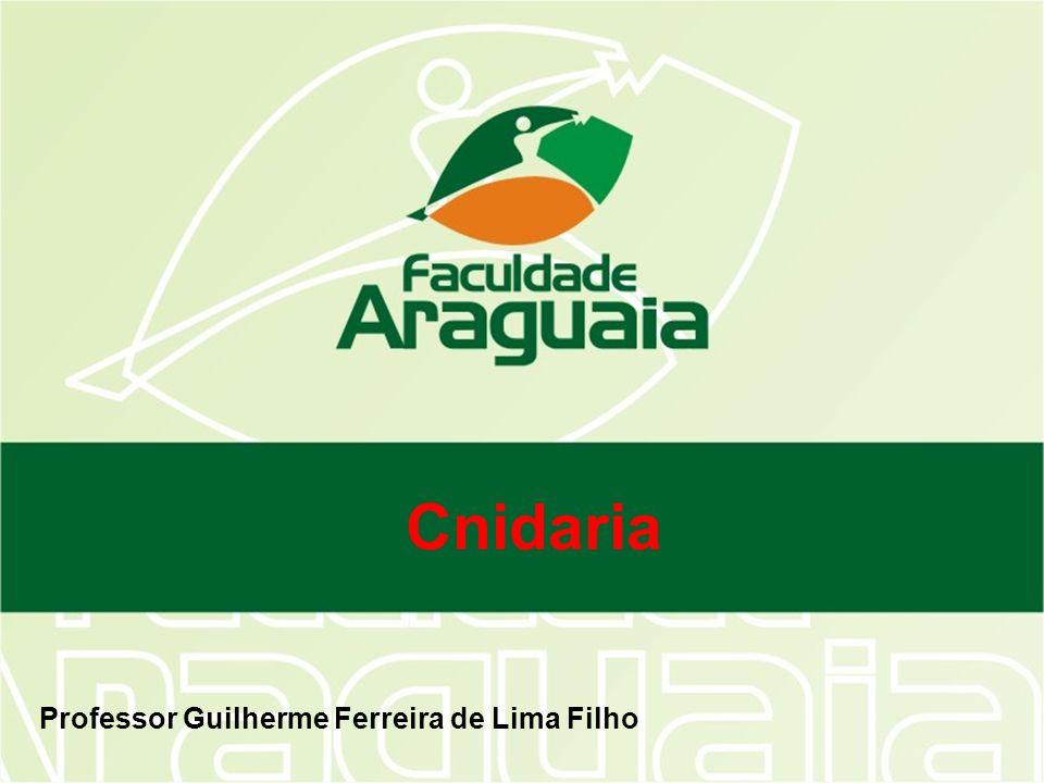Cnidaria Professor Guilherme Ferreira de Lima Filho