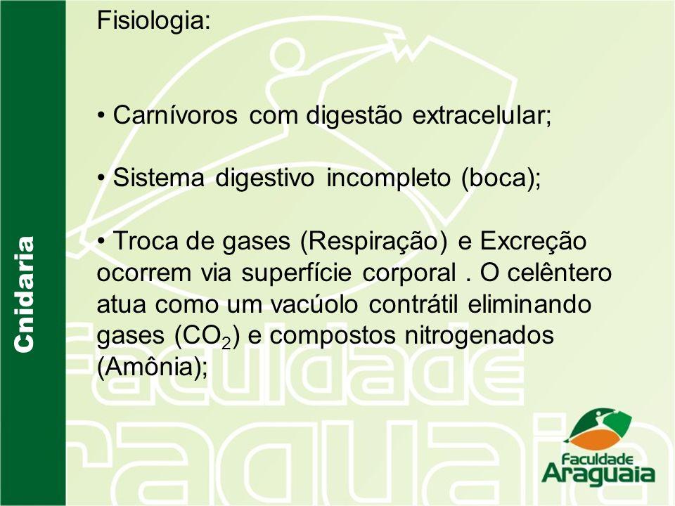 Fisiologia: Carnívoros com digestão extracelular; Sistema digestivo incompleto (boca);