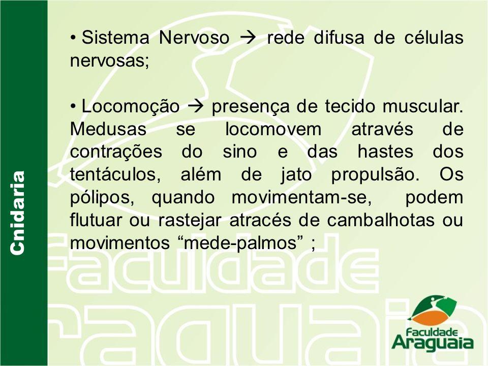 Sistema Nervoso  rede difusa de células nervosas;
