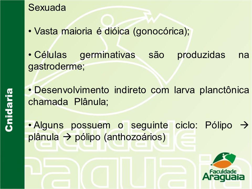 Sexuada Vasta maioria é dióica (gonocórica); Células germinativas são produzidas na gastroderme;