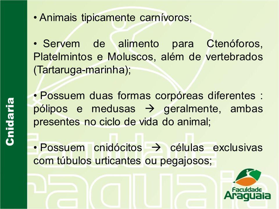Animais tipicamente carnívoros;