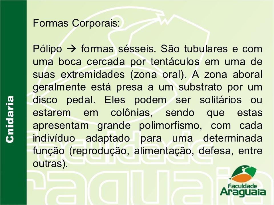 Formas Corporais:
