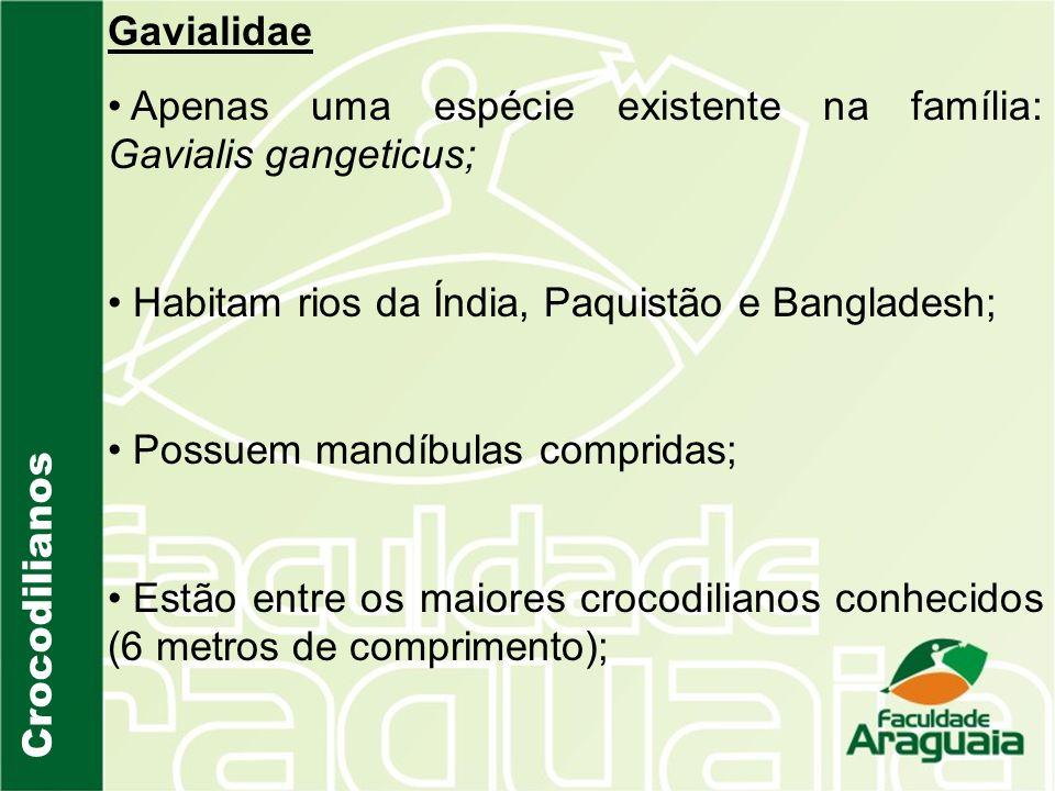 Gavialidae Apenas uma espécie existente na família: Gavialis gangeticus; Habitam rios da Índia, Paquistão e Bangladesh;