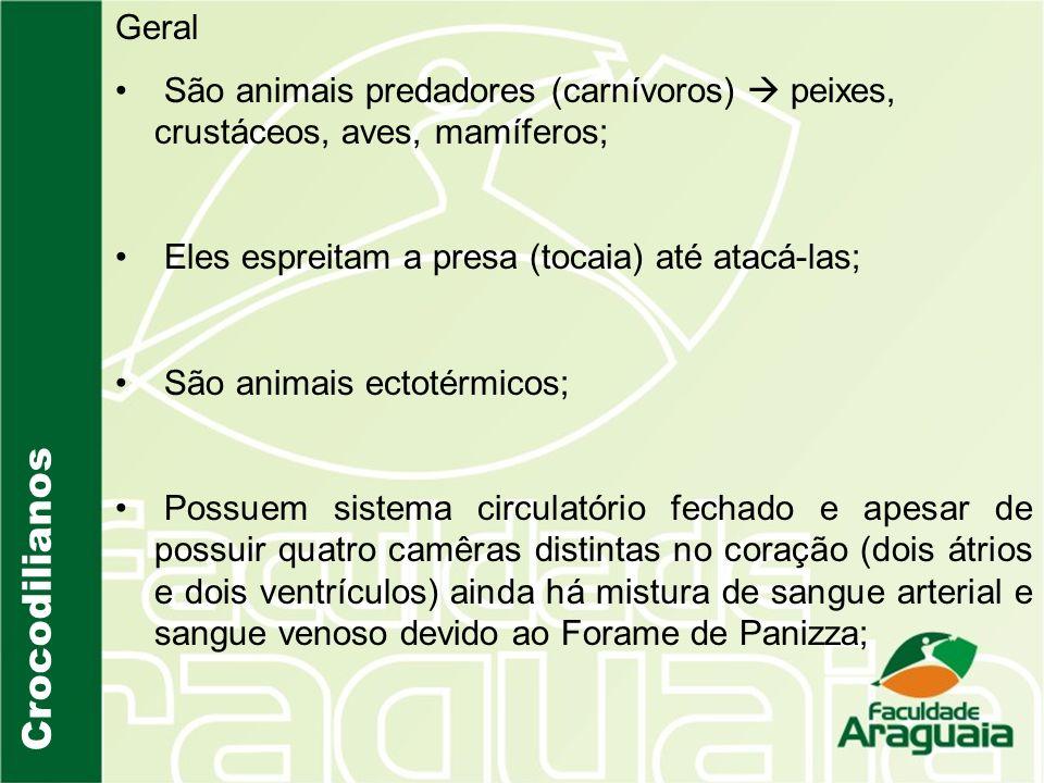 Geral São animais predadores (carnívoros)  peixes, crustáceos, aves, mamíferos; Eles espreitam a presa (tocaia) até atacá-las;