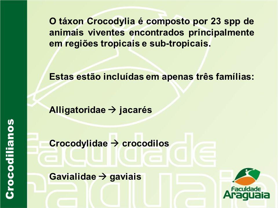 O táxon Crocodylia é composto por 23 spp de animais viventes encontrados principalmente em regiões tropicais e sub-tropicais.