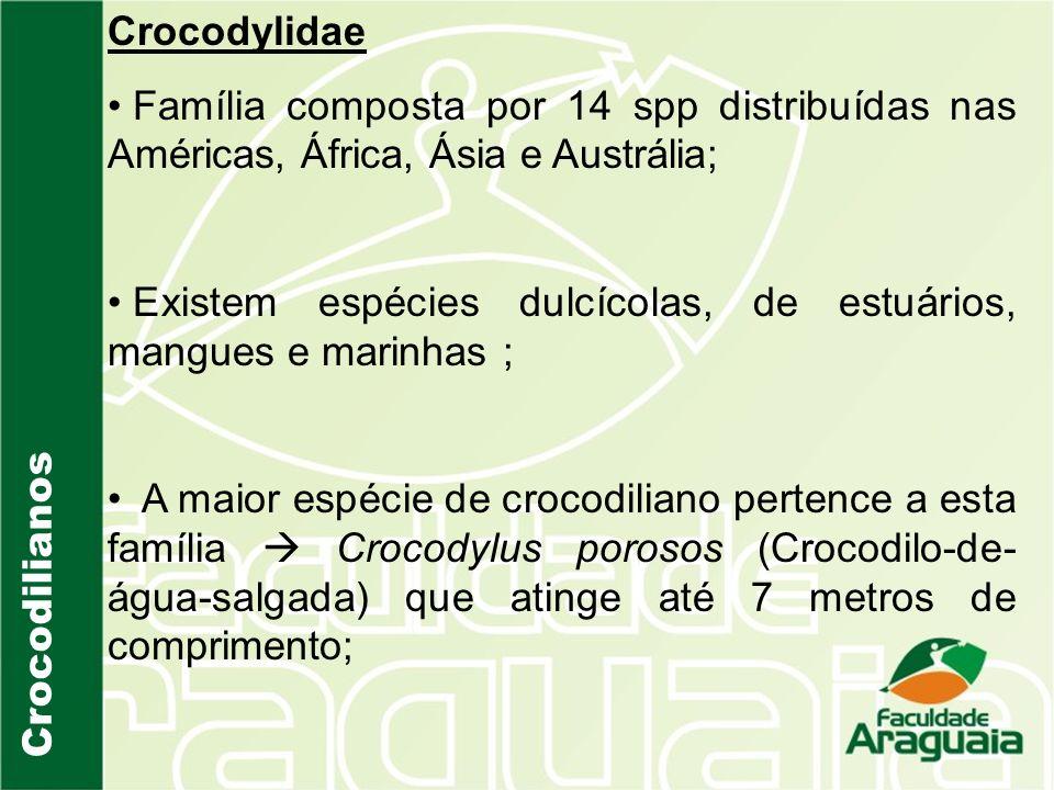 CrocodylidaeFamília composta por 14 spp distribuídas nas Américas, África, Ásia e Austrália;