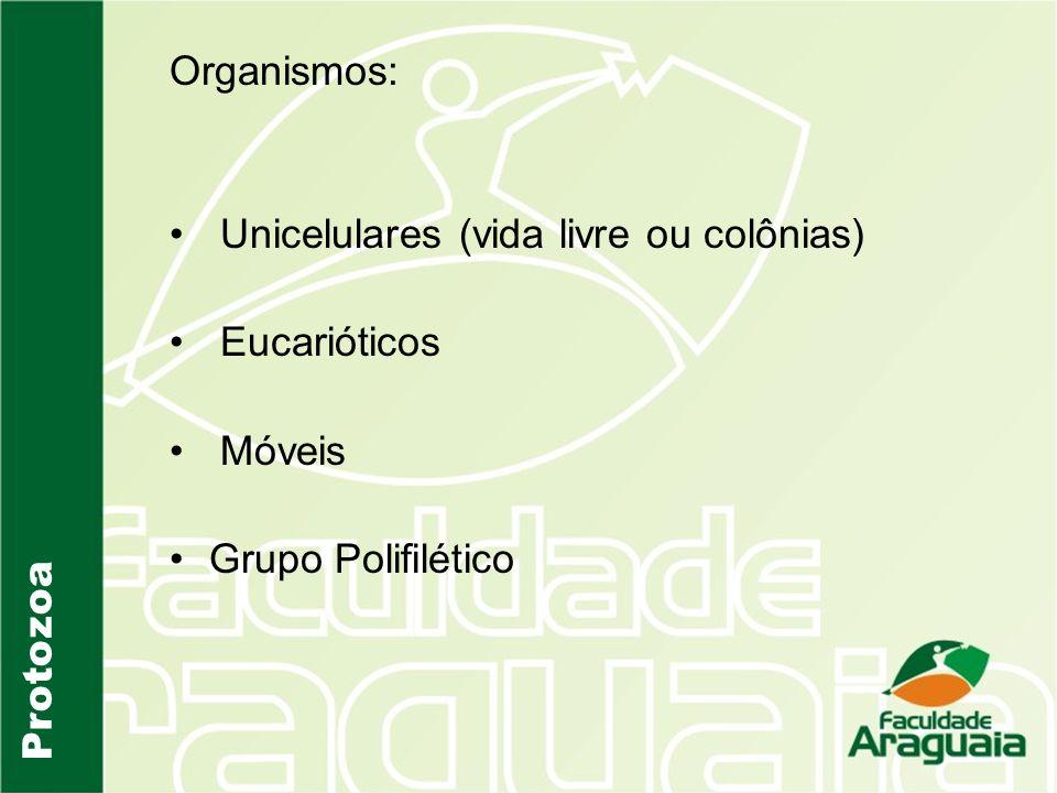 Organismos: Unicelulares (vida livre ou colônias) Eucarióticos Móveis Grupo Polifilético Protozoa