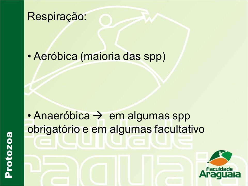 Aeróbica (maioria das spp)