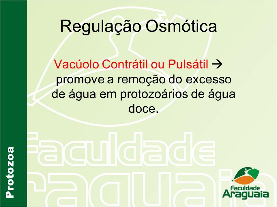 Regulação Osmótica Vacúolo Contrátil ou Pulsátil  promove a remoção do excesso de água em protozoários de água doce.