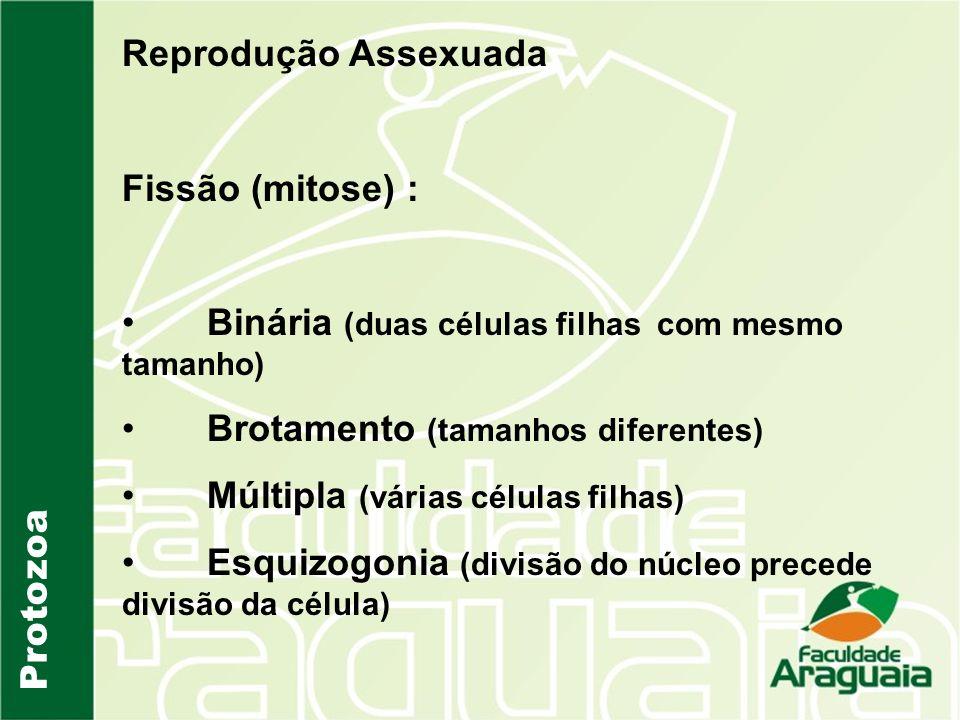 Reprodução Assexuada Fissão (mitose) : Binária (duas células filhas com mesmo tamanho) Brotamento (tamanhos diferentes)
