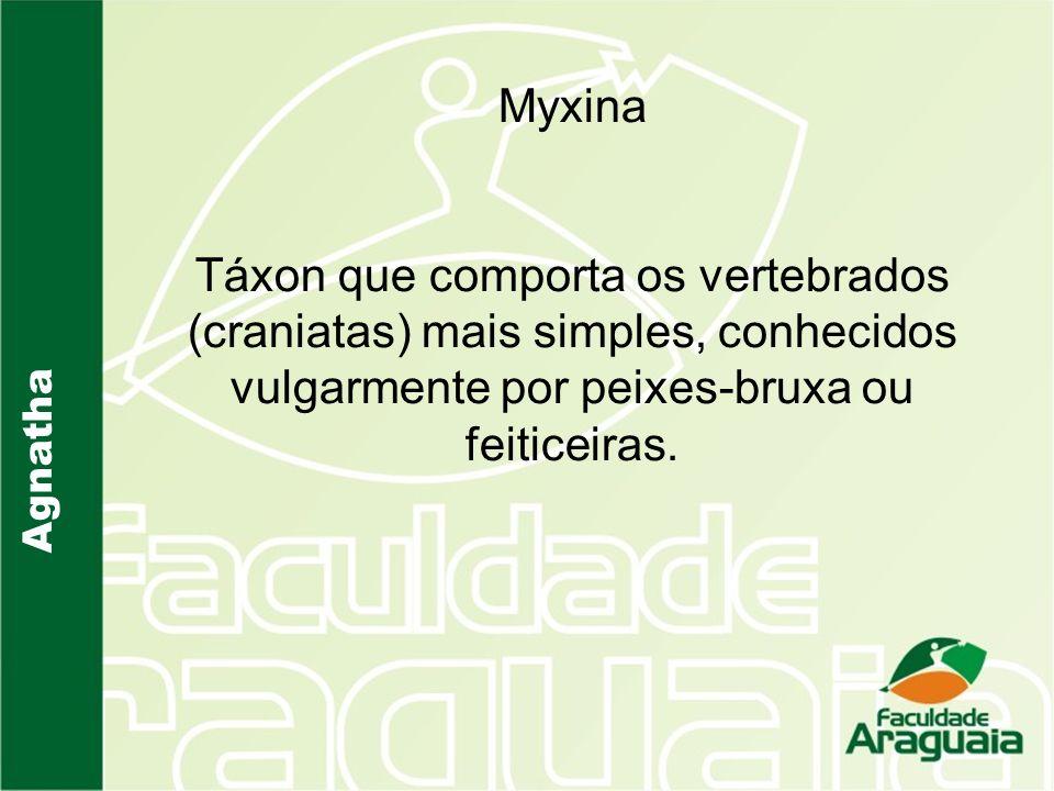 Myxina Táxon que comporta os vertebrados (craniatas) mais simples, conhecidos vulgarmente por peixes-bruxa ou feiticeiras.