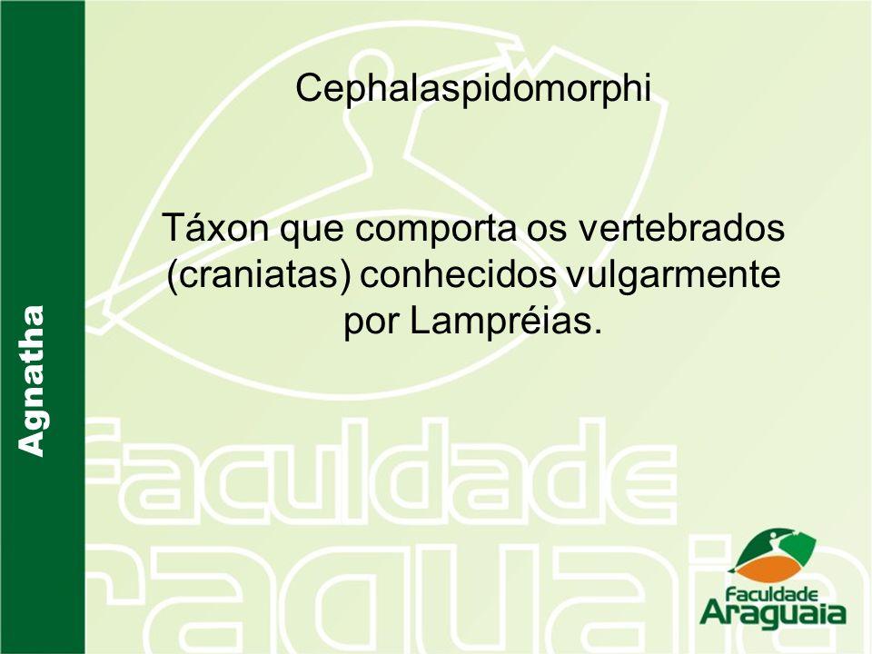 Cephalaspidomorphi Táxon que comporta os vertebrados (craniatas) conhecidos vulgarmente por Lampréias.