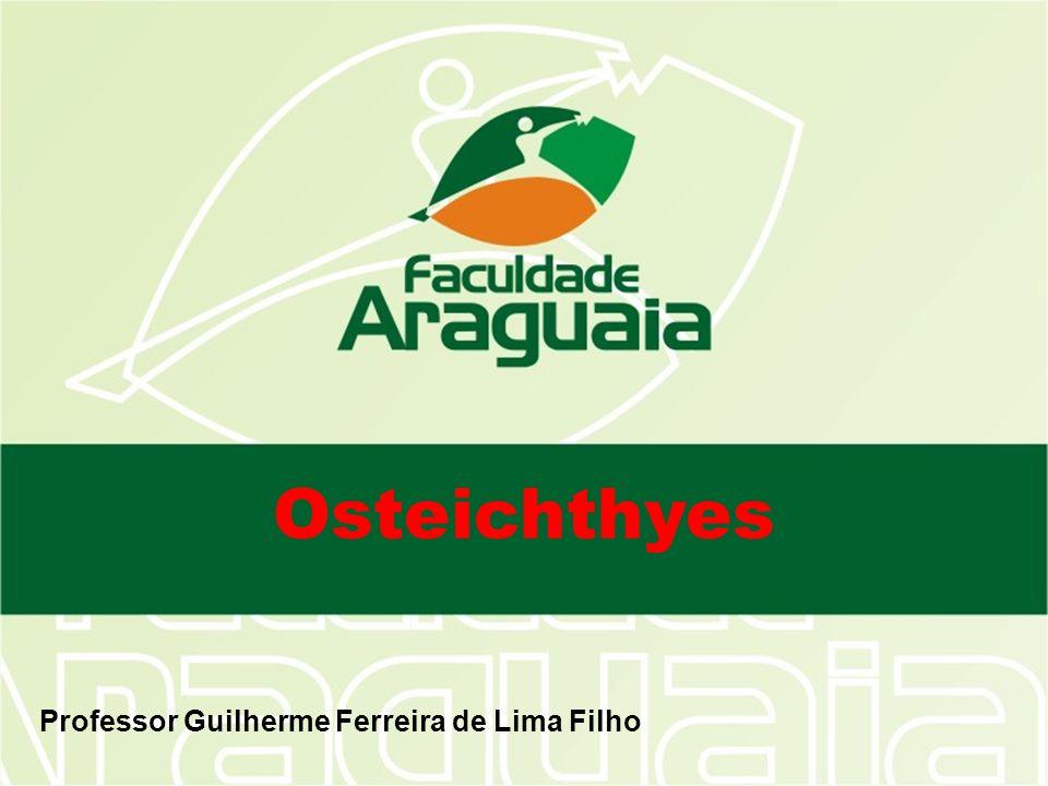 Osteichthyes Professor Guilherme Ferreira de Lima Filho
