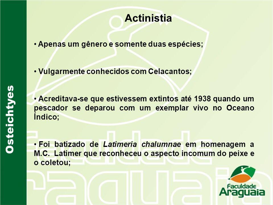 Actinistia Osteichtyes Apenas um gênero e somente duas espécies;