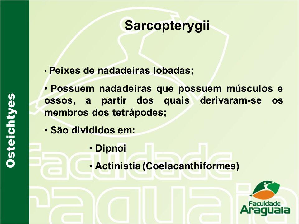 Sarcopterygii Osteichtyes