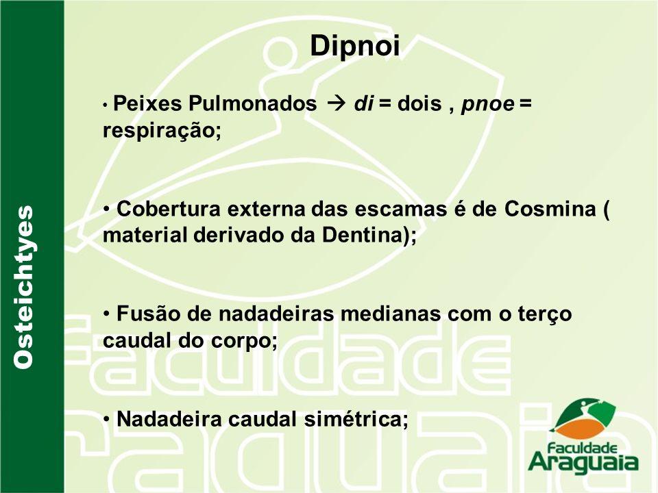 DipnoiPeixes Pulmonados  di = dois , pnoe = respiração; Cobertura externa das escamas é de Cosmina ( material derivado da Dentina);