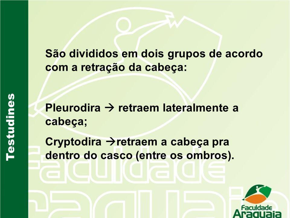 São divididos em dois grupos de acordo com a retração da cabeça: