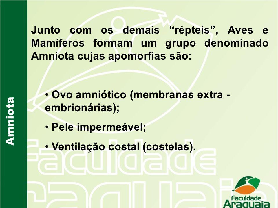 Junto com os demais répteis , Aves e Mamíferos formam um grupo denominado Amniota cujas apomorfias são: