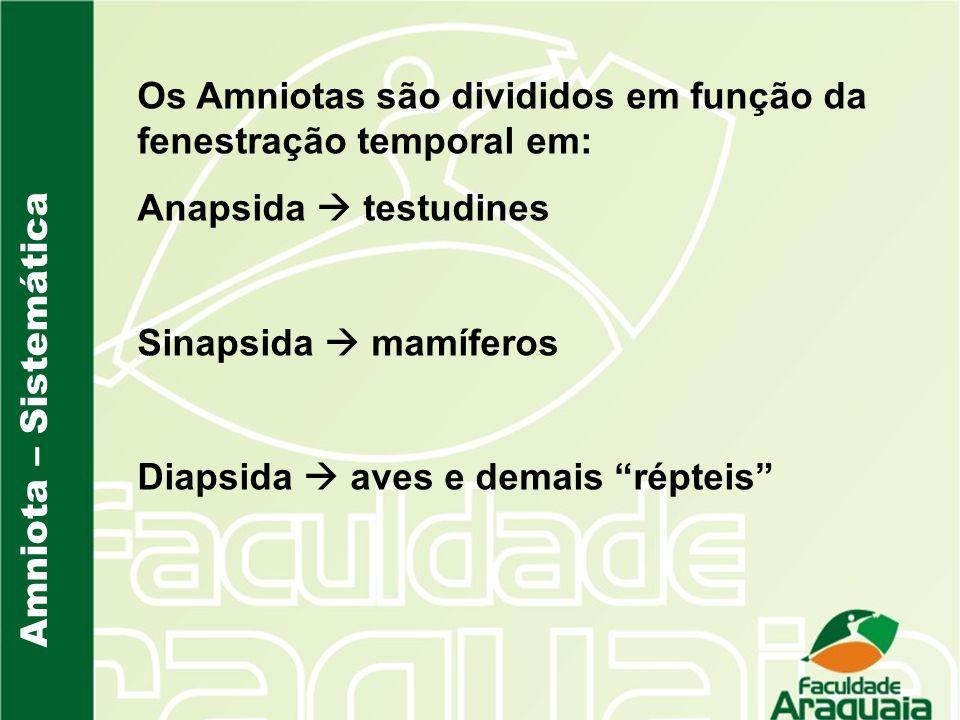 Os Amniotas são divididos em função da fenestração temporal em: