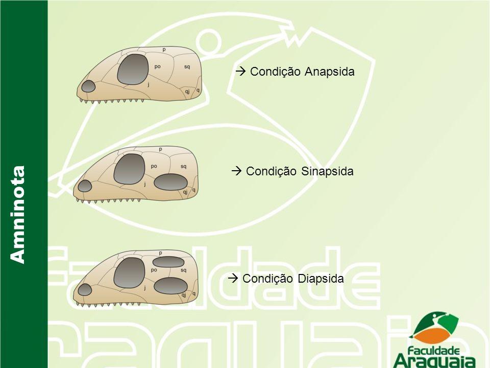  Condição Anapsida  Condição Sinapsida Amninota  Condição Diapsida