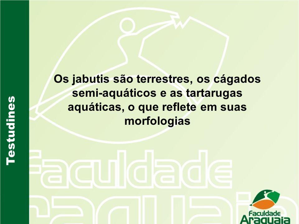 Os jabutis são terrestres, os cágados semi-aquáticos e as tartarugas aquáticas, o que reflete em suas morfologias