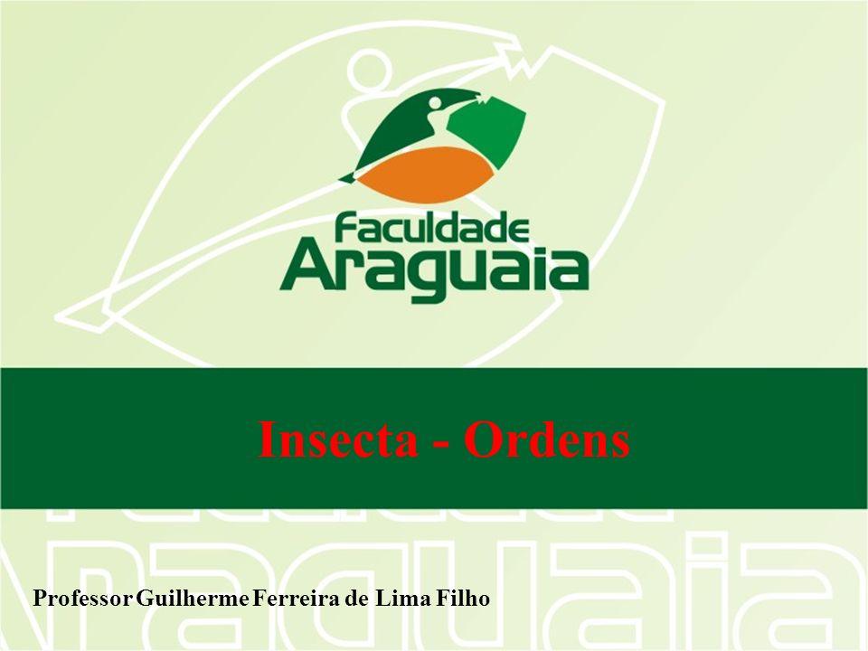 Insecta - Ordens Professor Guilherme Ferreira de Lima Filho