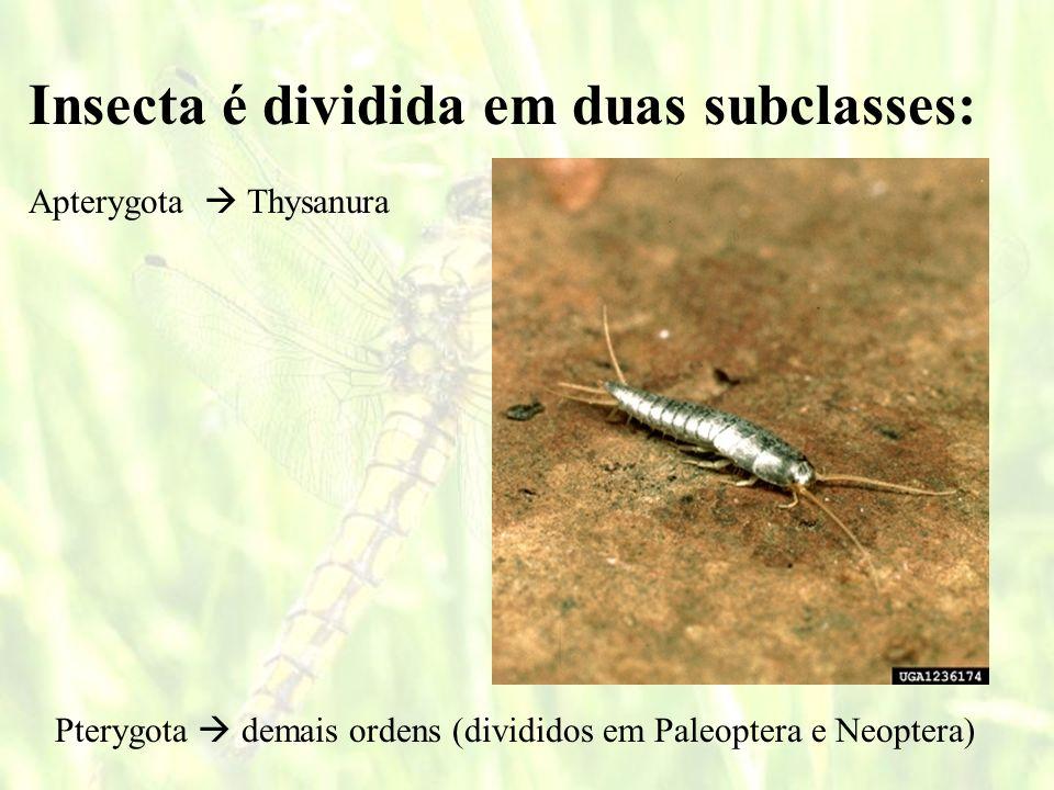 Insecta é dividida em duas subclasses:
