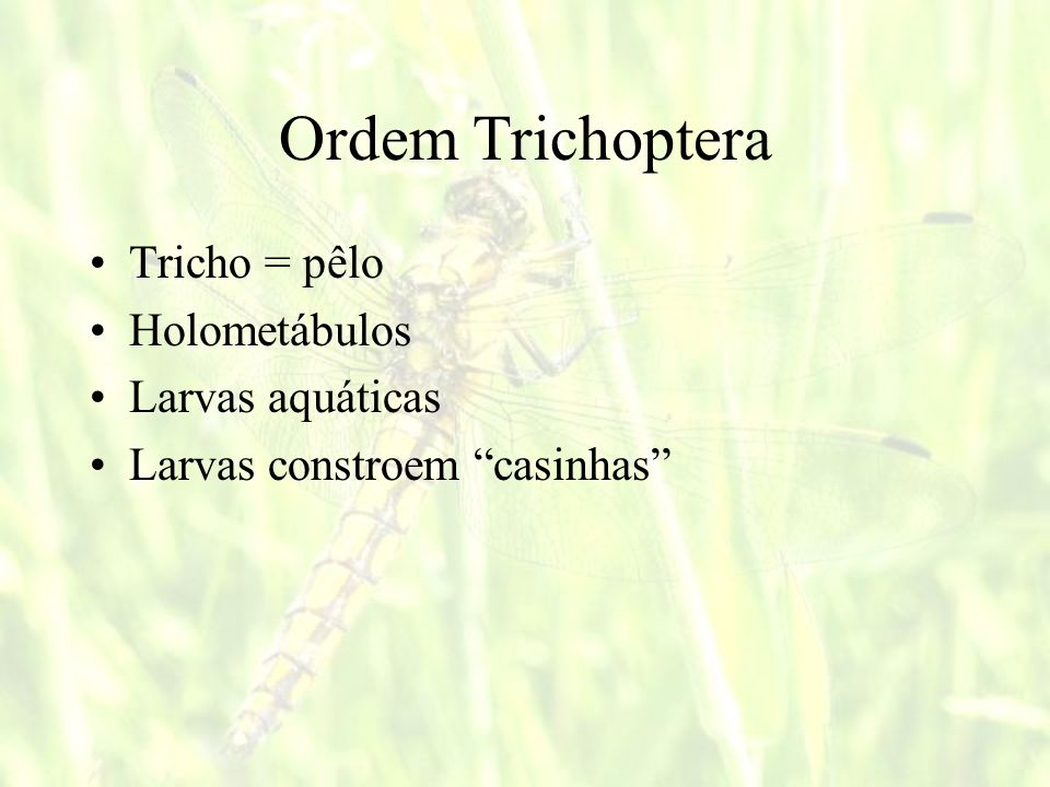Ordem Trichoptera Tricho = pêlo Holometábulos Larvas aquáticas