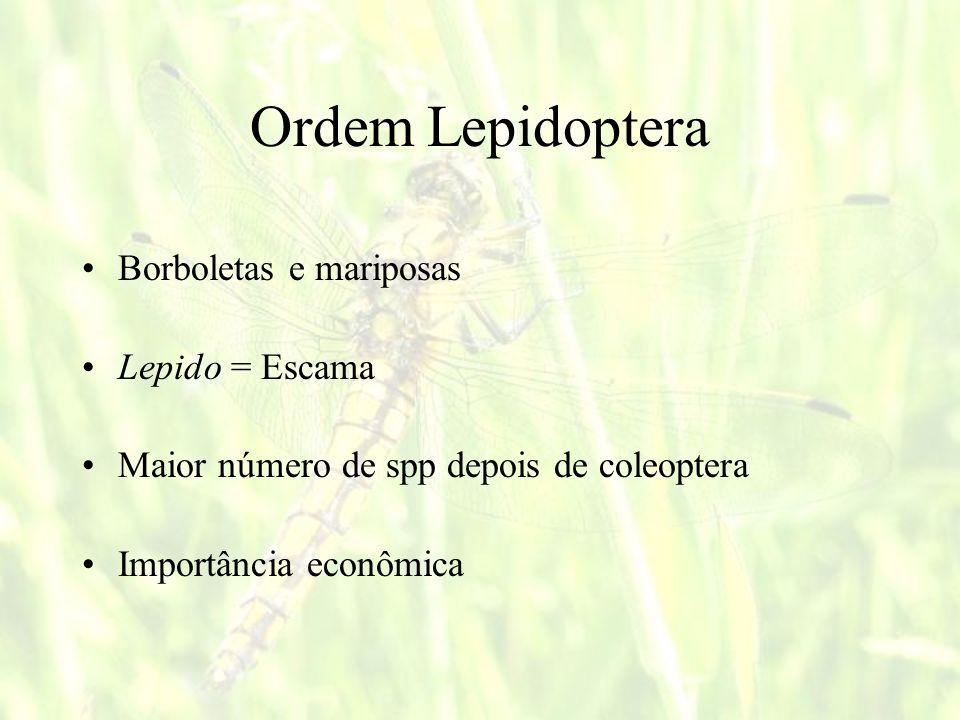 Ordem Lepidoptera Borboletas e mariposas Lepido = Escama