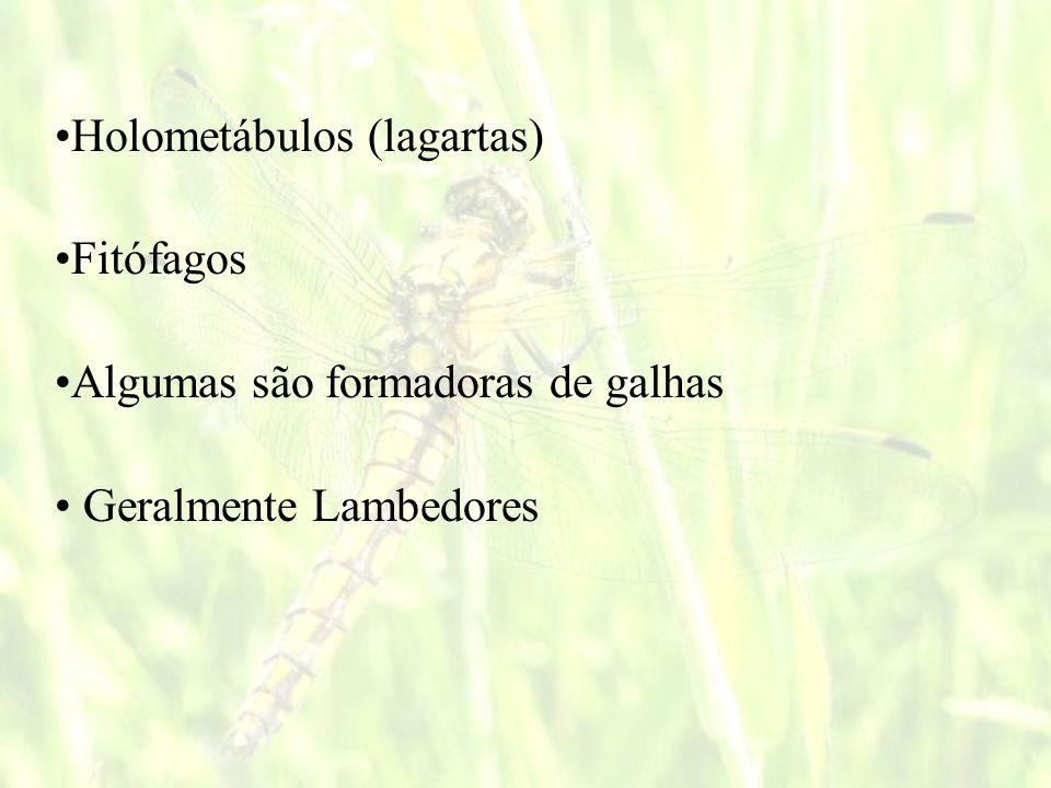 Holometábulos (lagartas)