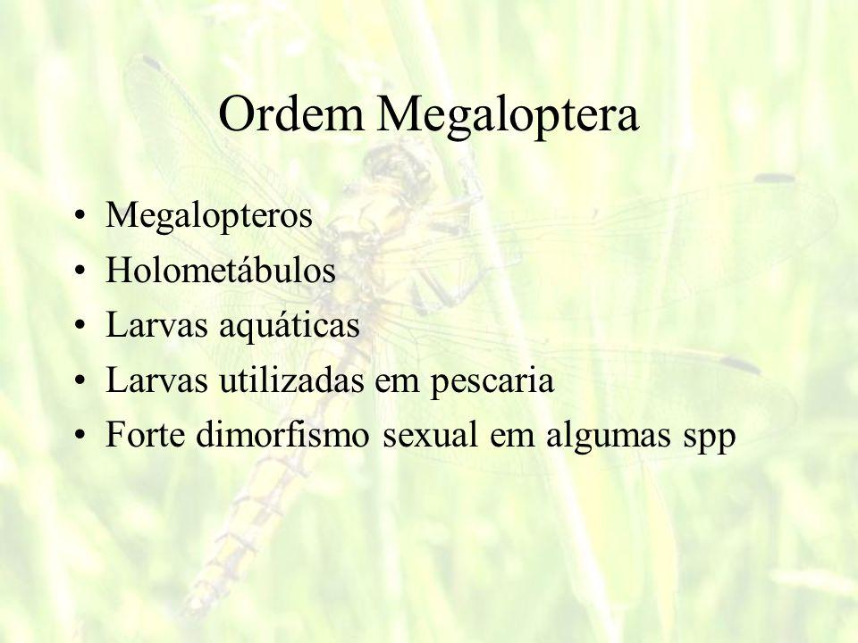 Ordem Megaloptera Megalopteros Holometábulos Larvas aquáticas