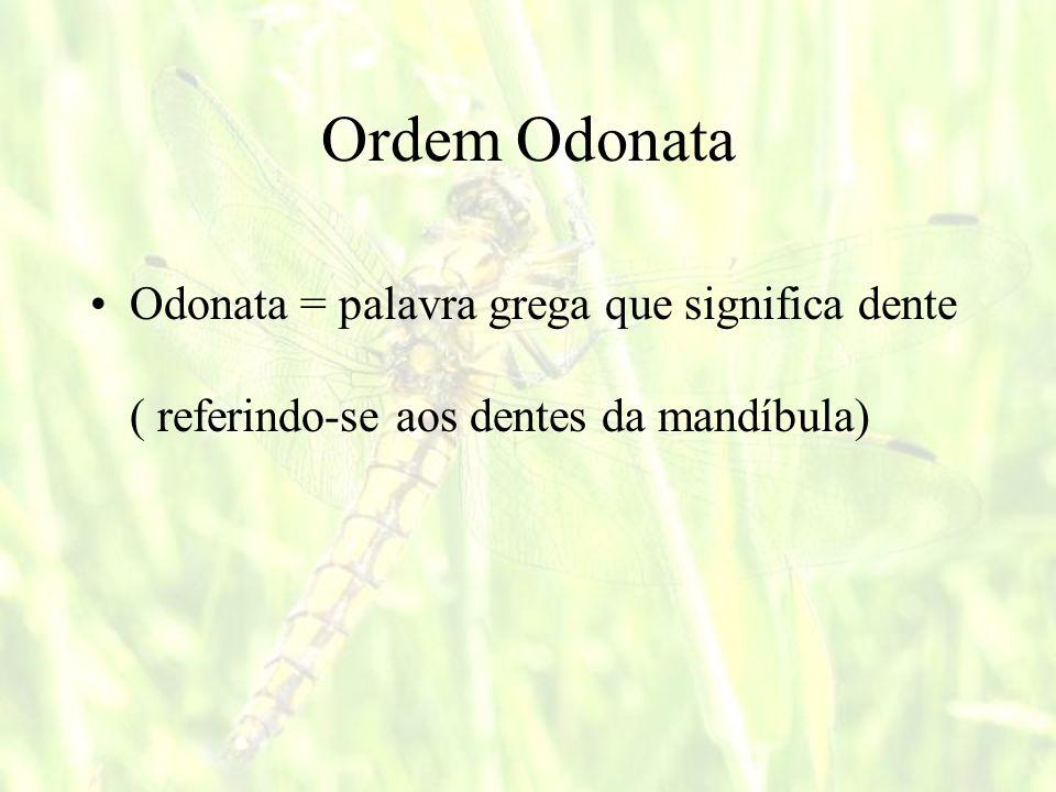 Ordem Odonata Odonata = palavra grega que significa dente ( referindo-se aos dentes da mandíbula)