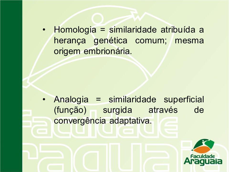 Homologia = similaridade atribuída a herança genética comum; mesma origem embrionária.