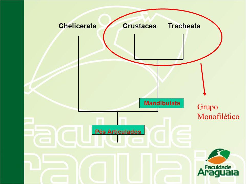 Grupo Monofilético Chelicerata Crustacea Tracheata Mandibulata