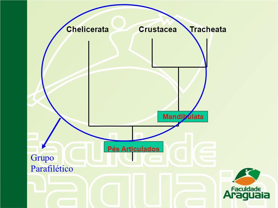 Grupo Parafilético Chelicerata Crustacea Tracheata Mandibulata