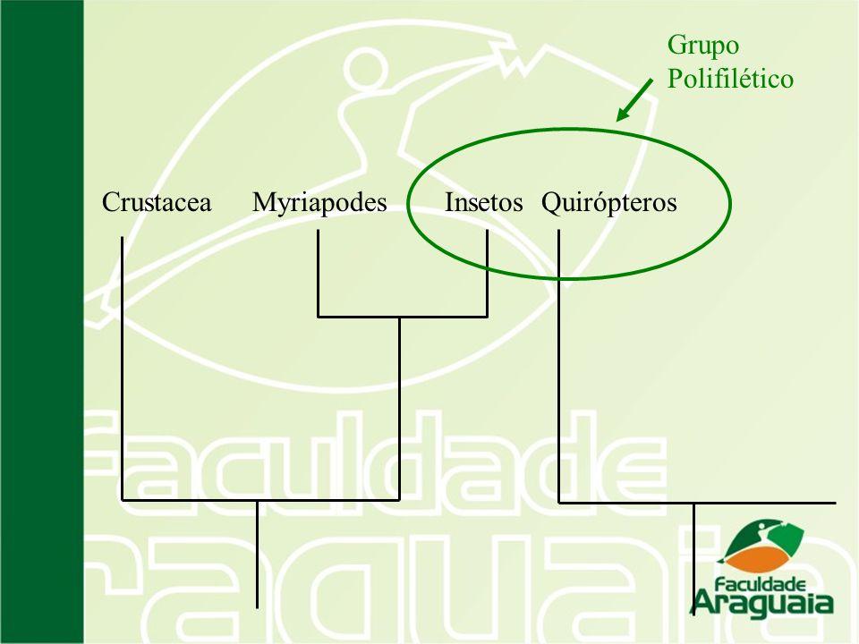 Grupo Polifilético Crustacea Myriapodes Insetos Quirópteros