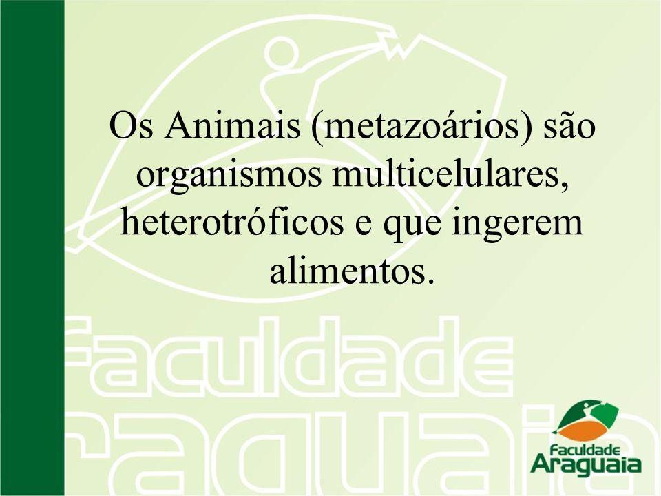 Os Animais (metazoários) são organismos multicelulares, heterotróficos e que ingerem alimentos.