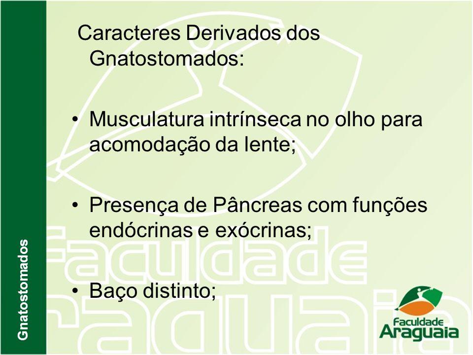 Caracteres Derivados dos Gnatostomados: