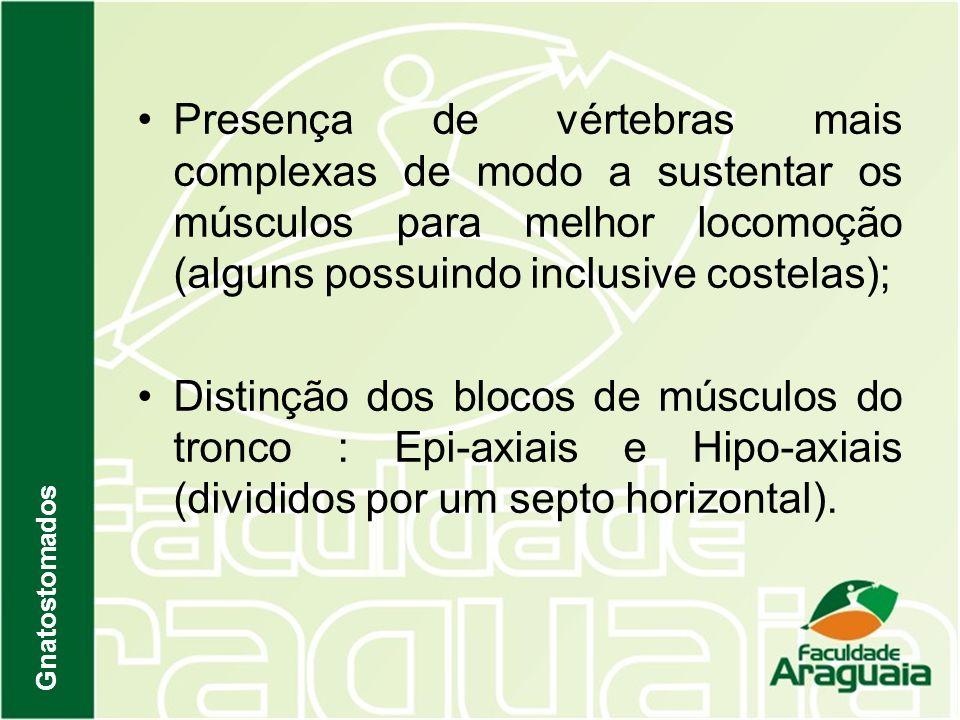 Presença de vértebras mais complexas de modo a sustentar os músculos para melhor locomoção (alguns possuindo inclusive costelas);