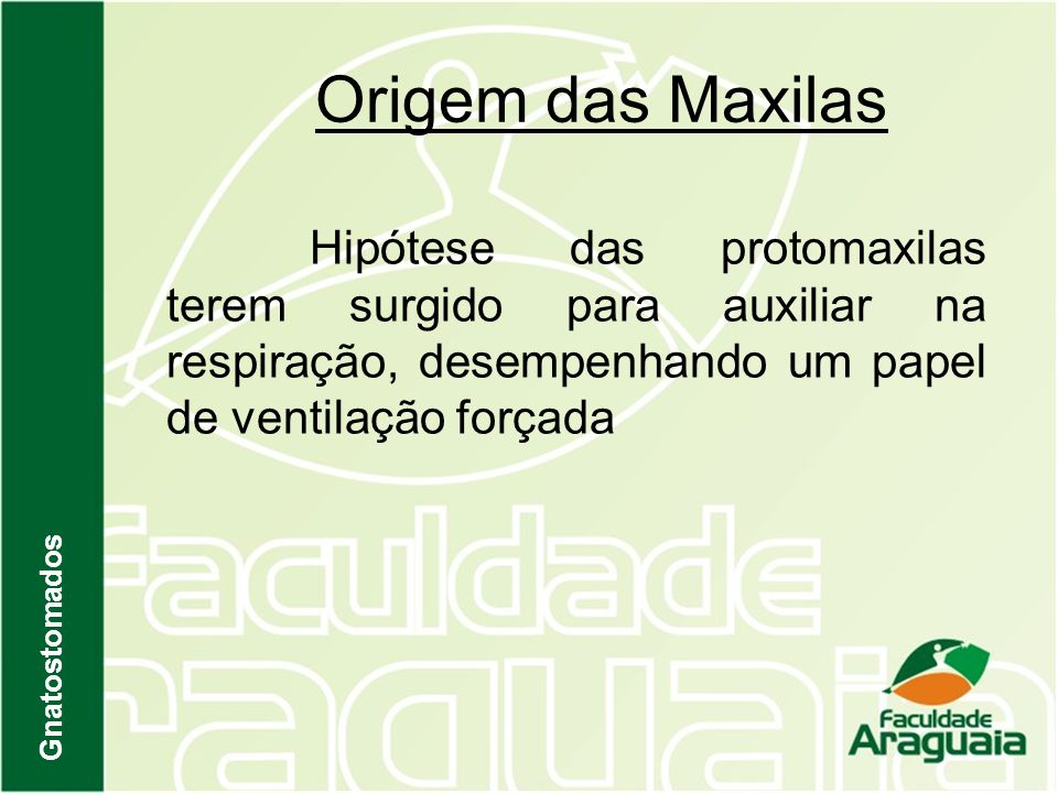 Origem das Maxilas Hipótese das protomaxilas terem surgido para auxiliar na respiração, desempenhando um papel de ventilação forçada.