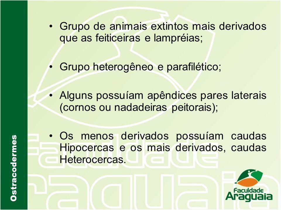 Grupo heterogêneo e parafilético;
